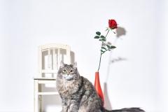 21.03.01_cat0672