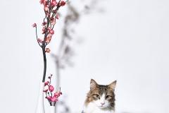 21.03.01_cat0725