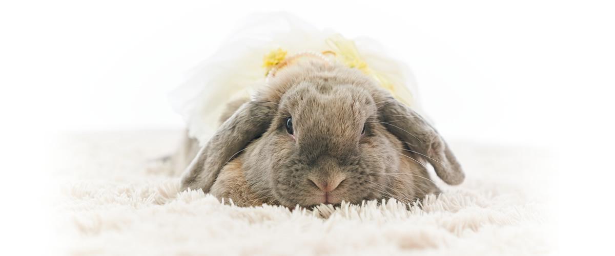 ペット(ウサギ写真)
